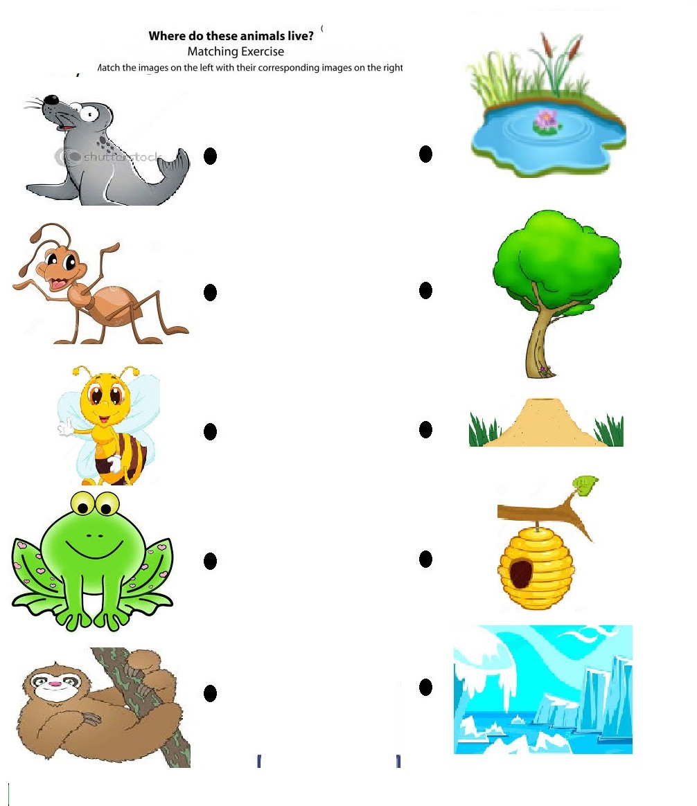 Match the Animals to their Habitat Worksheets
