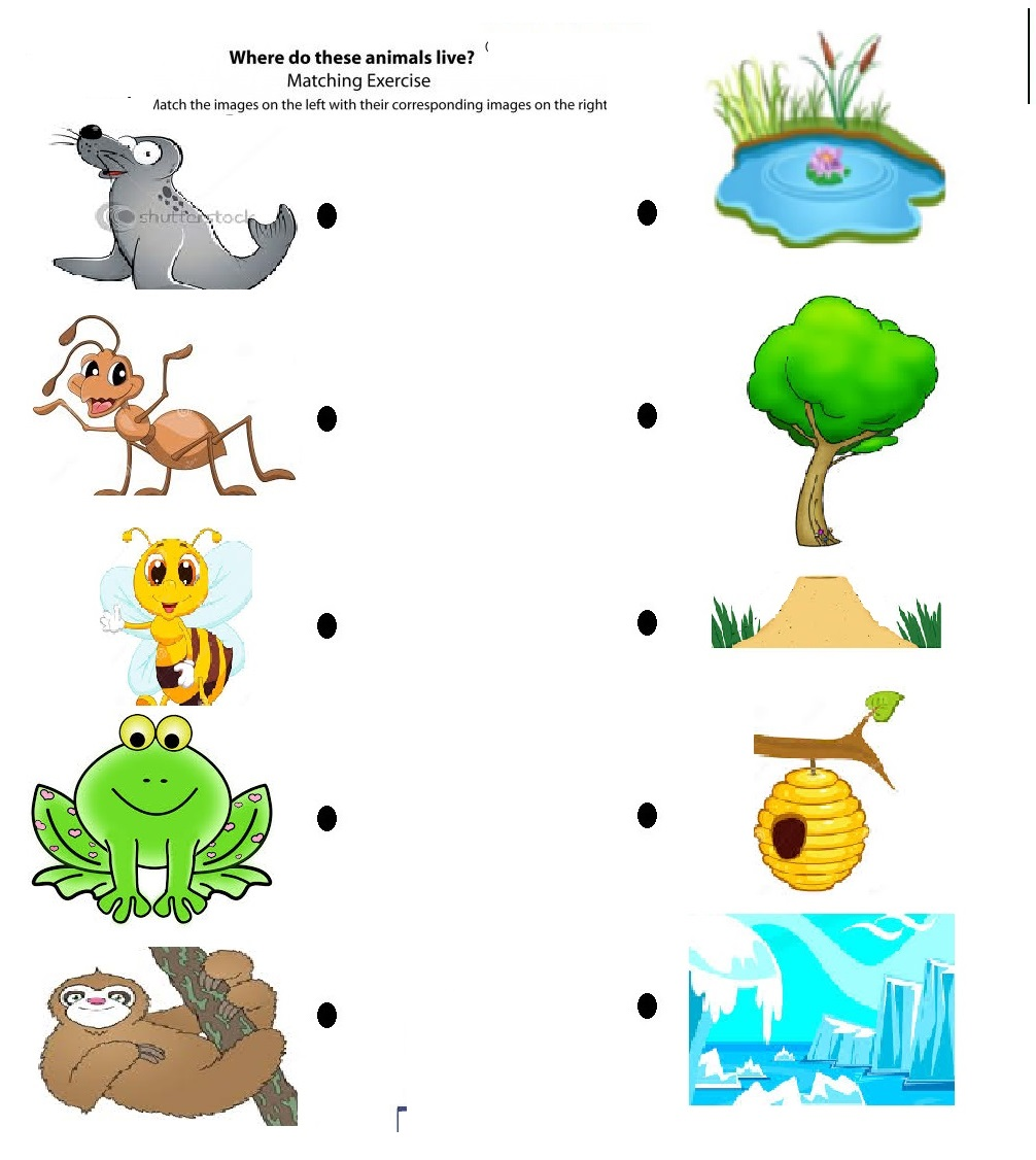 Matching animals to their home worksheet : Crafts and ...