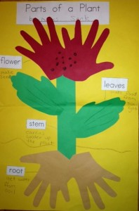 Plants bulletin board | Crafts and Worksheets for ...