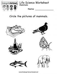 life-science-worksheet-printable