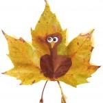 maple-leaf-turkey