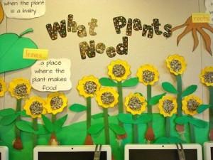 sunflower bulletin board