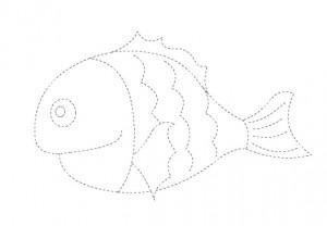 fish_trace