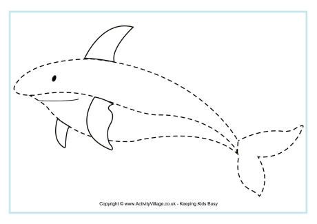 shark_tracing