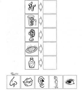 five senses cut-paste worksheet
