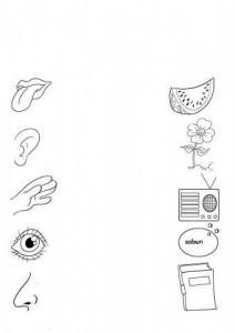 five senses worksheet for kids (1)
