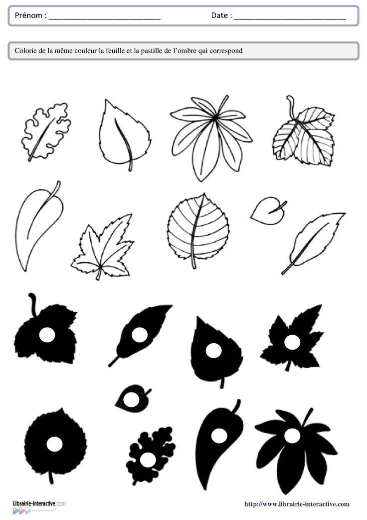 leaf shadow worksheet