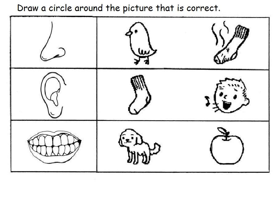 5 Senses Worksheet For Kids (11) Crafts And Worksheets For Preschool,Toddler  And Kindergarten