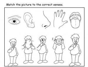 5 senses worksheet for kids (13)