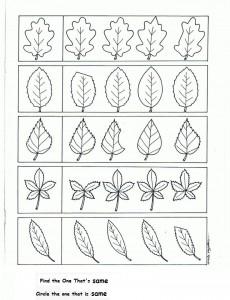 leaf worksheet