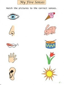 match 5 senses worksheet for kids (4)