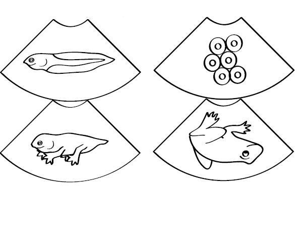cut and paste life cycle frog worksheet (2)