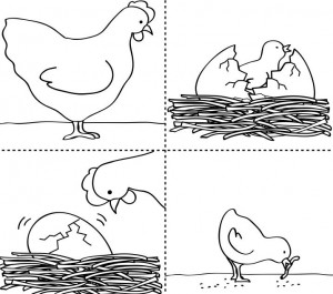 life cycle chick coloring page