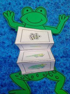 cycle life of  frog