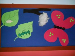 life of cycle butterfly craft idea for kids (2)