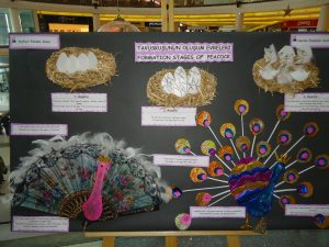 life of cycle peacock craft